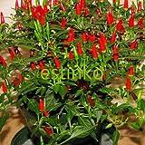 Heirloom 50pcs/lot Thai Sun Hot Pepper Capsicum Annuum Ornamental Chili Seeds Bonsai Plant Mini Hot Pepper Seeds