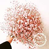 Potted Flower Seeds Baby's Breath, Pink Gypsophila Seeds, Pink Baby'breath,about 100 Particles