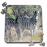 Angelique Cajam Safari Animals - South African 2 Zebras front view - 10x10 Inch Puzzle (pzl_20113_2)