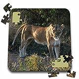 Angelique Cajam Big Cat Safari - South African Lioness side view - 10x10 Inch Puzzle (pzl_20126_2)