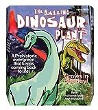 Dino Plant