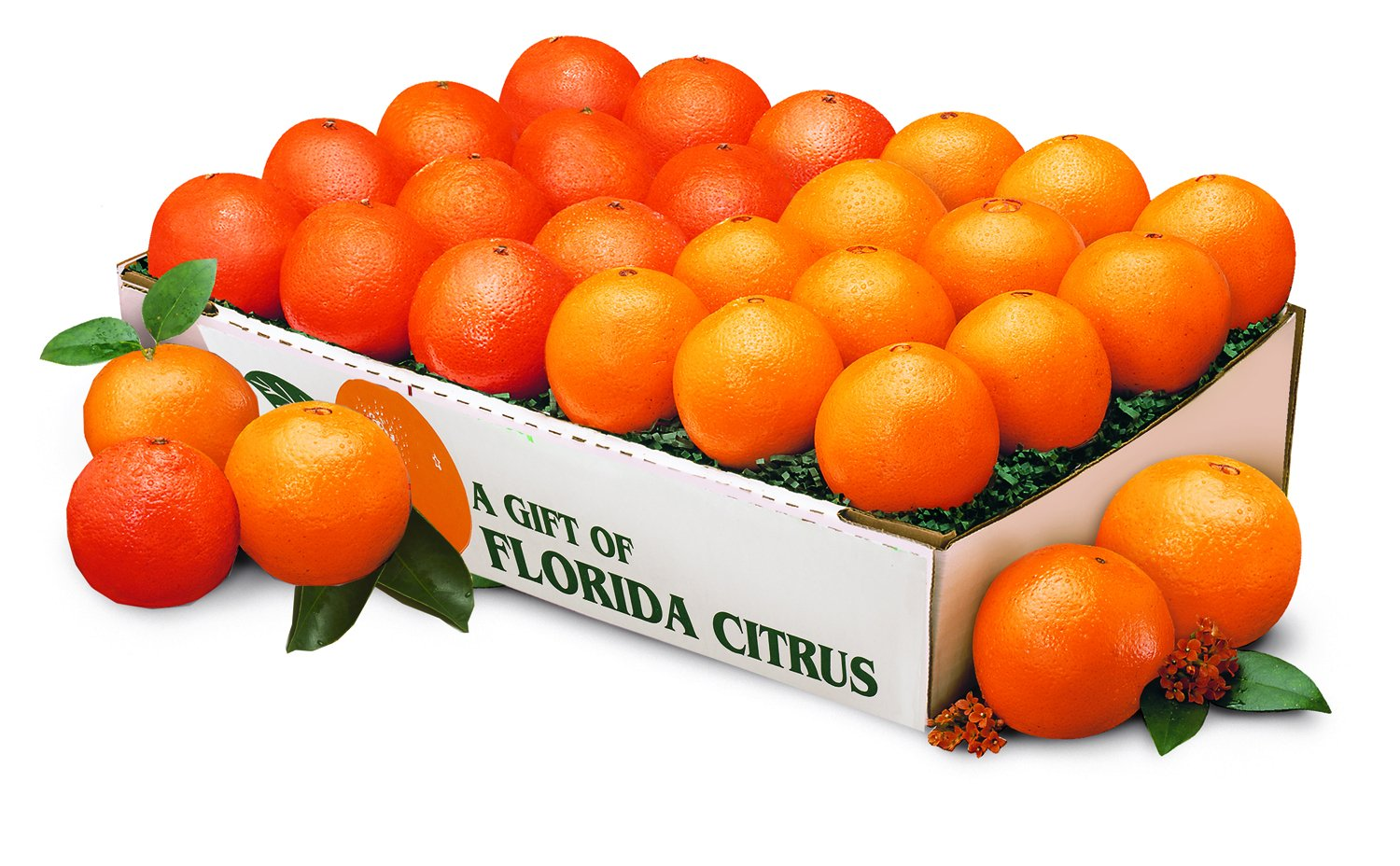 Orange Ring Florida Oranges and Florida Tangerines