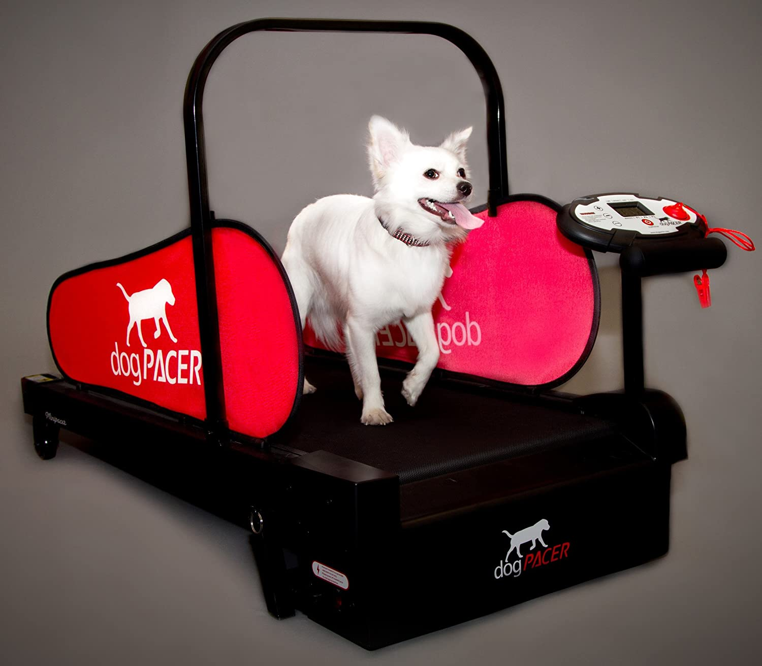 MiniPacer Dog Treadmill Review