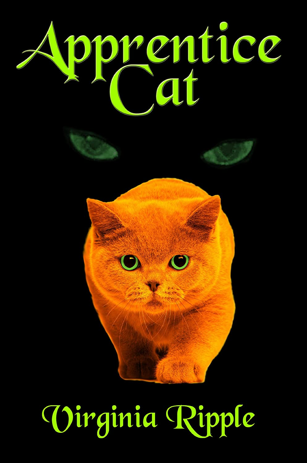 2Apprentice-Cat-Toby-with-mysterious-eyes