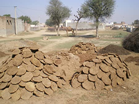 stacks of cow dung drying