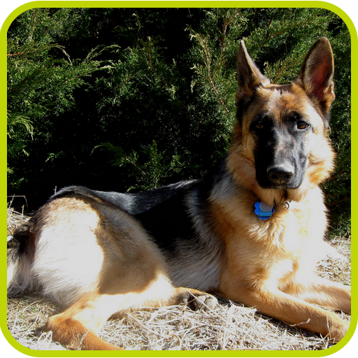 91c5WPZ8 sL - How to Train a Dog to Come When Called - Tips by K9-1 Dog Training.
